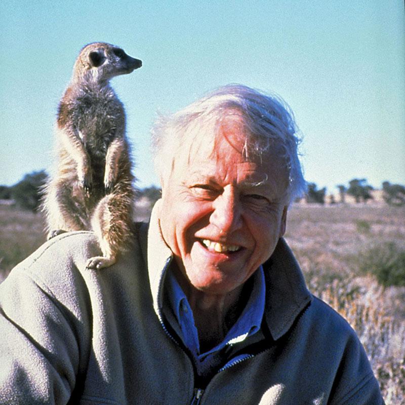 David Attenborough-portré
