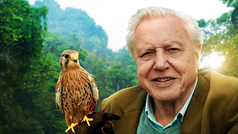 David Attenborough-portré