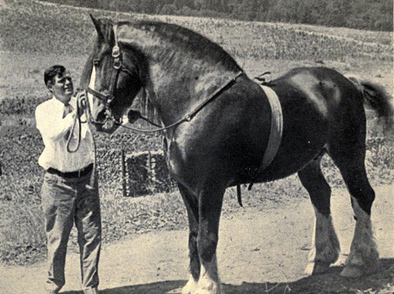 Jack London kedvenc lovával