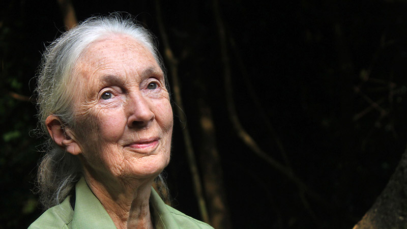 Jane Goodall a Gombe Nemzeti Parkban