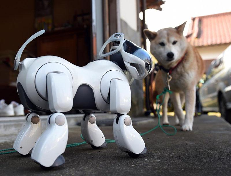Aibo, a robotkutya