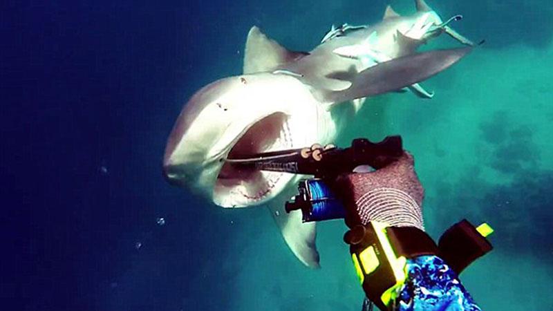 A cápákat minden esetben az elkövetők közé sorolták
